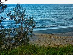 Banksia, beach, blue (elphweb) Tags: falsehdr fhdr seaside sea ocean water trees forest bush foliage australia outdoor