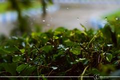 Rain Karachi 02 (theXaib) Tags: blue rain 50mm closeup