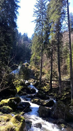 Black Forest April 2015