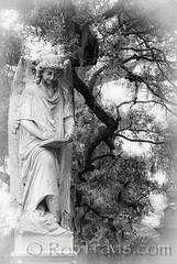 Magnolia Cemetary, Charleston SC (Rob Travis) Tags: statue angel blackwhite charleston magnoliacemetary