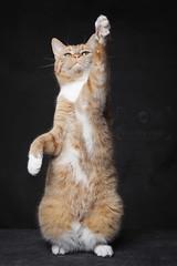 Hurray fur Sunday! (Esther Vinju Photography) Tags: pet cats pets animal animals cat photography kitten katten kat maine kitty coon mainecoon beast esther dieren dier poes poezen kater beasts beesten coons beest vinju esthervinju