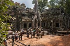 The Nightmare of Prasat Ta Prohm (ប្រាសាទតាព្រហ្ម), Siem Reap, Cambodia