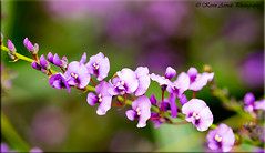 DSCF3258 (Kevin Arends) Tags: flower flora blossom blooming