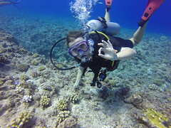 "Plongée à Bora Bora <a style=""margin-left:10px; font-size:0.8em;"" href=""http://www.flickr.com/photos/83080376@N03/17127375821/"" target=""_blank"">@flickr</a>"