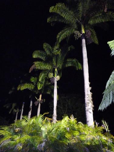 Jayuya, Hacienda Gripinas night shot