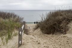 Grey Day Water Watchers (brucetopher) Tags: ocean sea people seascape beach water silhouette bay sand surf waves dunes dune watch atlantic shore figure beaches figures atlanticocean bodiesofwater saltwater capecodbay