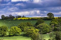 Rural England (John R Woodward Photography) Tags: england sky green clouds rural canon countryside shropshire farm canondslr canoneos bucolic ruralengland canonllenses llenses canon6d ruralshropshire canon6dwithllenses johnrwoodwardphotography