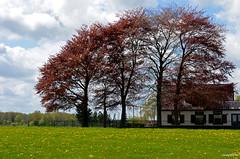 Flowers and Trees Landscape (JaapCom) Tags: flowers trees tree nature netherlands clouds farmhouse landscape natural natuur landschaft veluwe dandelions niederlande paardebloemen wezep jaapcom