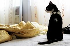 Minou (alessiabii) Tags: pet love cat gatto sonno amore domestico animale letto biancoenero minou tenerezza