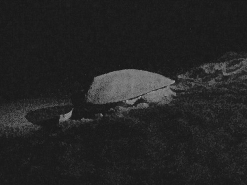 Green sea turtle in Cyprus at the Marine Turtle Conservation Project on June 4, 2016