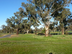 Henty Morning Walk 15.6.16 (stevojc310) Tags: countrytown wintermorning frostymorning