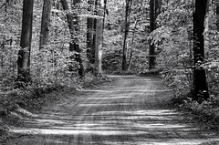 Road through the forest (mswan777) Tags: road park trees bw landscape leaf spring nikon quiet michigan sigma winding wilderness 70300mm ansel d5100