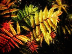 Colourful leaves (J.C. Moyer) Tags: red plants color colour green nature leaves rain yellow flora wetleaves