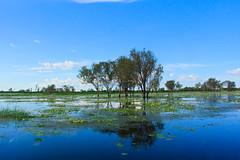 So many shades of blue (rachFNQ) Tags: blue trees nature water reflections river landscape nationalpark australia kakadu australianlandscape northernterritory waterscape naturephotography kakadunationalpark yellowwaterbillabong