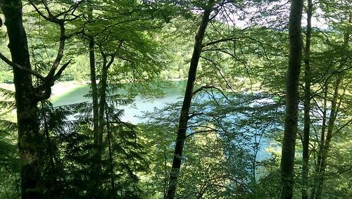 Vom Alpenrosenweg auf den Schwansee