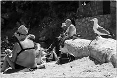 On the beach (Roberto Spagnoli) Tags: sea summer people blackandwhite holiday beach mare estate seagull trunk vest tronco spiaggia vacanza gabbiano biancoenero canottiera