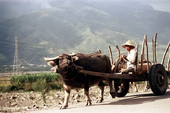 32-178 (ndpa / s. lundeen, archivist) Tags: road winter people mountains color fall film hat animal rural 35mm wagon village nick taiwan horns ox hills driver dirtroad cart 1970s 1972 hualien 32 taiwanese eastcoast unidentified dewolf rurallife republicofchina conicalhat easterncoast easterntaiwan nickdewolf photographbynickdewolf hualiencounty oxdrawn reel32