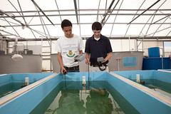 Aquaculture in the Classroom (MyFWC Research) Tags: aquaculture hatchery fishhatchery stockenhancement school education outreach portmanatee florida fwc myfwc myfwccom