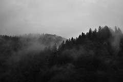 To Begone (Andrea Effulge) Tags: forest monochrome mist misty fog foggy dream dreamscape dreamy rainy raindrops raining july august andreaeffulge wandering mountains alps mountainforest magical myth mistery mistymountains blackandwhite phoenixfeatherxlight