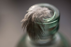 Finding A Place To Rest (Captured Heart) Tags: feather glass glassbottle macromondays softness softcolors opposites