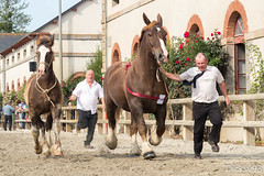 Concours dpartemental du cheval de trait breton  Lamballe Ctes d'Armor (Dicksy93) Tags: img3049 prsentation concours dpartemental du cheval de trait breton jument poulain horse capall caballo cavallo pferd paard animal tier mammifre elevage agriculture equid equitation personne trot extrieur outdoor haras lamballe ctes darmor 22 breizh bzh bretagne brittany france europe dicksy93 canon eos 650d licou licolle longe