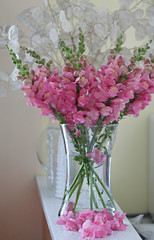 Kitchen Bouquet (bigbrowneyez) Tags: pink flowers stilllife nature beautiful petals fantastic pretty display gorgeous blossoms natura stunning bouquet lovely elegant fiori delicate belli snapdragons delightful mykitchen silverdollars bellissimo kitchenbouquet