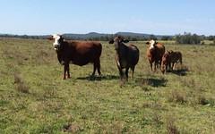 2, 50 Haughwood Road, Bora Ridge NSW