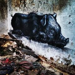 #ROA #pig in the dirt - #graffiti #streetart #Gent #Belgium #urbex (Ferdinand 'Ferre' Feys) Tags: ifttt instagram graffiti graffitiart graff streetart roa gent belgium urbex urbanart belgique belgië ghent gand urbanarte arteurbano ferdinandfeys