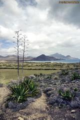 Pitas, Genoveses beach. ALMERÍA (SPAIN) (vivelaruta66.com) Tags: naturaleza spain playa almeria cabodegata genoveses