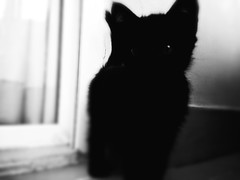 Devil (amrahmedalii) Tags: camera shadow pet nature beautiful beauty animal collage mystery cat wonderful amazing pretty shadows shot shade mysterious beast incredible wondering iphone