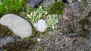 Rocks in the Garden 2