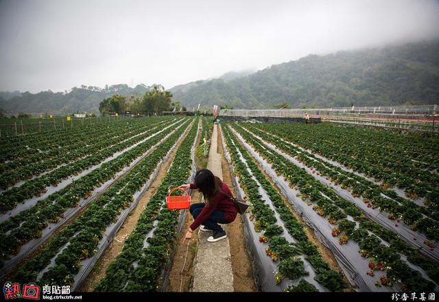 [遊記] 大湖珍香草莓園
