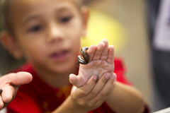 Science Festival (Pima County Public Library) Tags: kid tucson library science millipede murphy pcpl wilmont