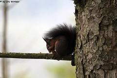 IMG_8313 (u.wittwer) Tags: park zoo schweiz switzerland tiere suisse tierpark heimat arth naturpark goldau widi