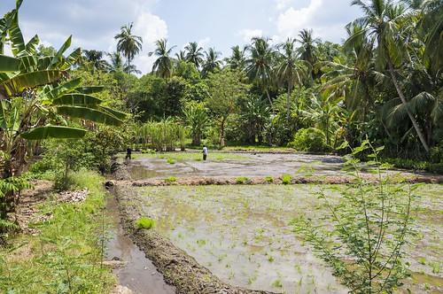 anuradhapura - sri lanka 54