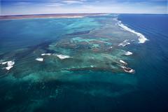 WA Coral Bay - 4611