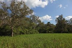 Yellow Water, Kakadu (cathm2) Tags: travel cruise nature nationalpark nt australia kakadu yellowwater northernterritory cooinda
