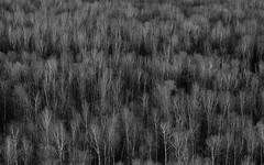 Texture / Oscillogram (Cold light of comatose) Tags: 55250 vsco