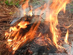 DSCN2489 (moisesbarcellos) Tags: life book power dancing flames books burn firedancing ember fier