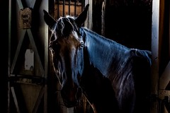 In The Shadows (jeanmarie shelton) Tags: light shadow portrait horse animal barn eyes nikon stall stable jeanmarie jeanmarieshelton