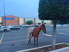 Parking lot, tethered horse-Walmart (UrbanGrammar) Tags: urban streets mexico traffic loop tranquility safety delight infrastructure connectivity urbanism neighbourhood adaptation park mobility carfree culdesac accessibility new mixeduse street main urban street pedestrian grid healthy urban patterns zones urbanism realm fused