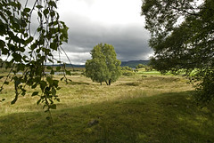 Ecosse, 2009 (Joseff_K) Tags: tree scotland meadow prairie arbre ecosse