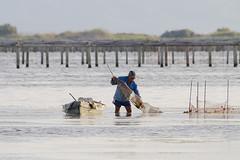 Trabajando al amanecer (magomu) Tags: sunrise work dawn boat trabajo fishing barca delta amanecer highkey ebro pesca ebre humedal clavealta deltadelebro