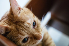(ChCh Chen) Tags: cats kitten kitty 24mm lifes a6000