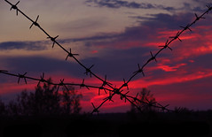Barbological etude (AzIbiss) Tags: sunset barb barbedwire dannertwire wire evening dusk scape pink tree sky cloud outline counterlight backlight contour keyline silhouette tangle plant obscure red blue black canon canondigital canonphotography canonixus ixus ixus275 elph outdoor amateur tomsk westernsiberia russia siberia decline end fall sundown barberwire dark escape obscene gloomy sombre sullen overcast salient
