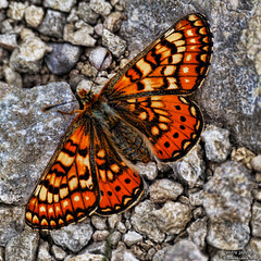 entre piedras (wuploteg1) Tags: castle butterfly la san huesca aragon hermitage mariposa sant castillo aragones pyrenees ermita pirineos sobrarbe pirineo aragn aragons aragonese celedonio altoaragon samitier mitier emeterio oscense fueva altoaragn