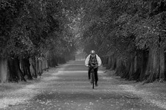 189/365: Cyclist, Lime Tree Avenue (Kelvin P. Coleman) Tags: park nottingham people bw blur tree blancoynegro canon vanishingpoint cyclist noiretblanc path blurred powershot 365 avenue schwarzweiss leading