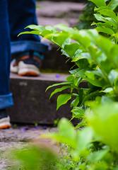 Botanical garden (Maria Eklind) Tags: street city plants lund flower garden se sweden sverige botanicalgarden cityview botaniskatrdgrden skneln botanicgareden botaniskatrdgrden botaniksatrdgren