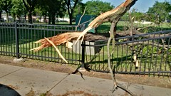 Tree Limb Down in Fuller Park #3 (artistmac) Tags: park street chicago tree fence illinois outdoor wroughtiron il repair fallen southside bent limb fuller fullerpark michaelbrown superintendent workorder blowndown hispark lethimactlikeitforachange