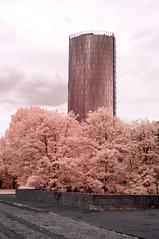 DSC02708 (FritzchensFritz) Tags: kln nordrheinwestfalen deutschland infrarot infrared ir645 heliopan falschfarben false colors
